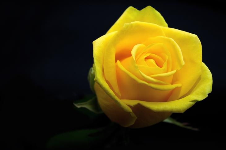 UNIQLO FLOWER 1
